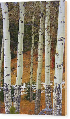 Aspens Of White Wood Print