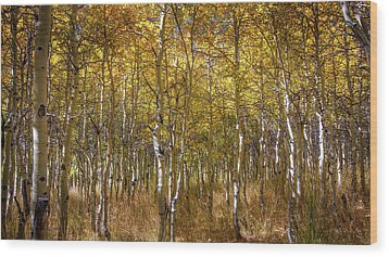 Aspens  Wood Print by Ralph Vazquez