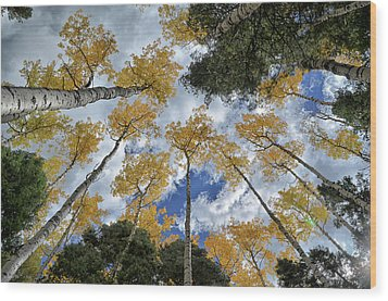 Wood Print featuring the photograph Aspens Reaching by Kevin Munro