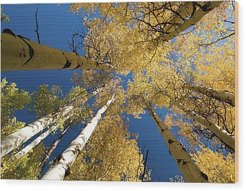 Wood Print featuring the photograph Aspens Up by Steve Stuller