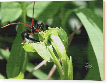 Assassin Bug Wood Print