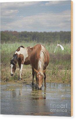 Assateague Pony Pair Wood Print