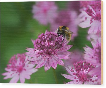 Pollination Wood Print by Shirley Mitchell