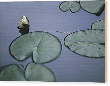 Wood Print featuring the photograph At Claude Monet's Water Garden 2 by Dubi Roman