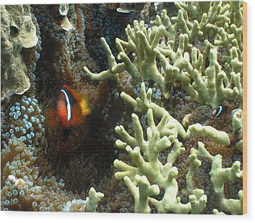 At Home On The Reef Wood Print