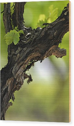 Wood Print featuring the photograph At Lachish Vineyard by Dubi Roman