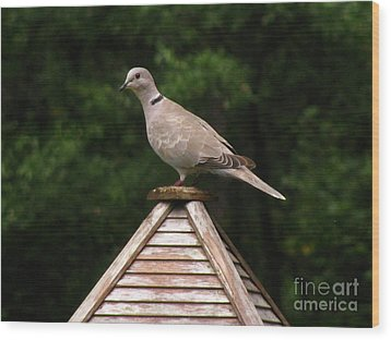 At The Top Of The Bird Feeder Wood Print