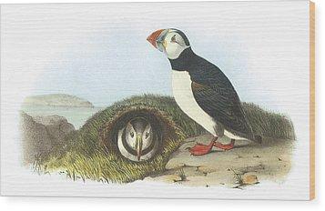 Atlantic Puffin Wood Print