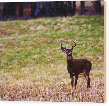 Attentive Buck Wood Print