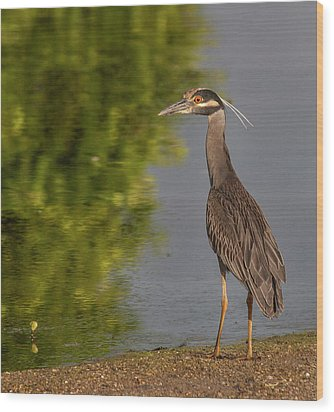 Wood Print featuring the photograph Attentive Heron by Jean Noren