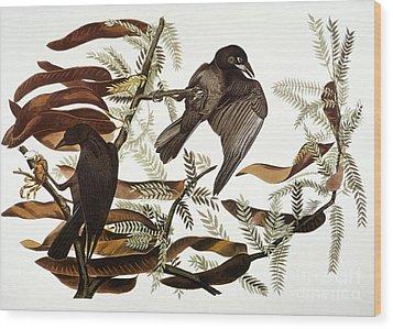 Audubon: Crow Wood Print by Granger