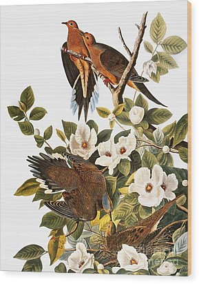 Audubon: Dove Wood Print by Granger