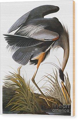 Audubon: Heron Wood Print by Granger