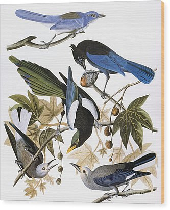 Audubon: Jay And Magpie Wood Print by Granger