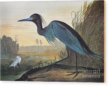 Audubon: Little Blue Heron Wood Print by Granger
