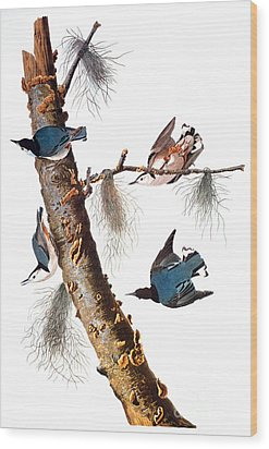 Audubon: Nuthatch Wood Print by Granger