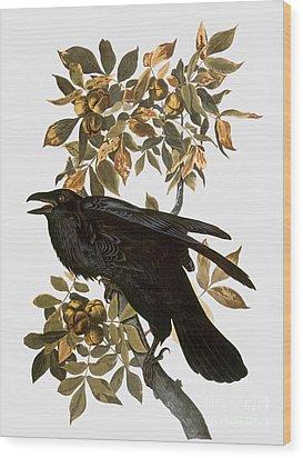 Audubon: Raven Wood Print by Granger