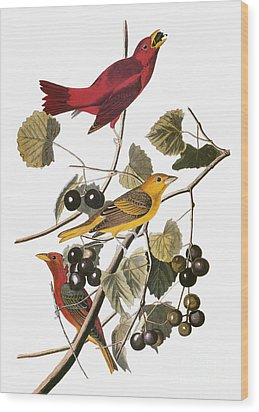 Audubon: Tanager Wood Print by Granger
