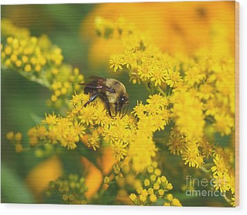 Wood Print featuring the photograph August Bee by Susan  Dimitrakopoulos
