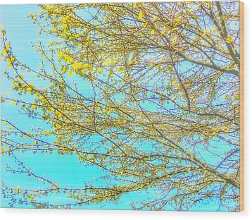 Wood Print featuring the photograph  Aura Of Springtime by Connie Handscomb