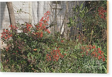 Wood Print featuring the photograph Austin Winter Berries by Linda Phelps