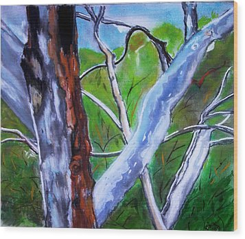 Australian Gum Trees Wood Print