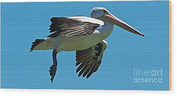 Australian Pelican In Flight Wood Print by Blair Stuart