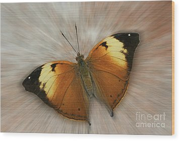 Autumn Leaf Butterfly Zoom Wood Print