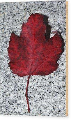 Autum Maple Leaf 1 Wood Print by Robert Morin