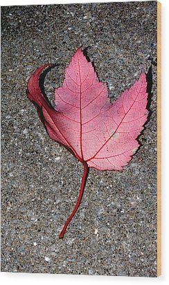 Autum Maple Leaf 2 Wood Print by Robert Morin
