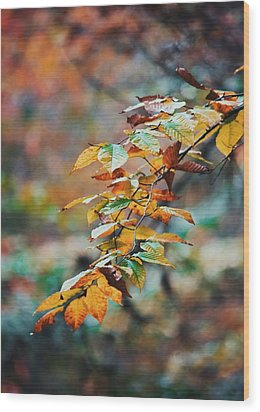 Wood Print featuring the photograph Autumn Aesthetics by Parker Cunningham