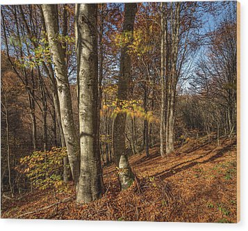 Wood Print featuring the photograph Autumn Afternoon In Forest by Davorin Mance