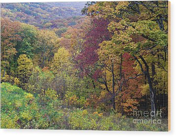 Wood Print featuring the photograph Autumn Arrives In Brown County - D010020 by Daniel Dempster