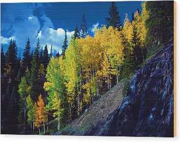 Autumn Aspen Wood Print