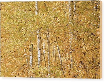 autumn aspen leaves Populus tremuloides Wood Print by Ed Book