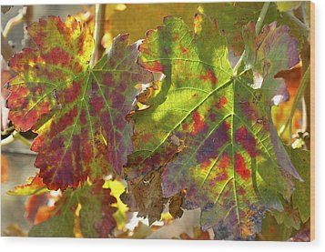 Wood Print featuring the photograph Autumn At Lachish Vineyards 2 by Dubi Roman