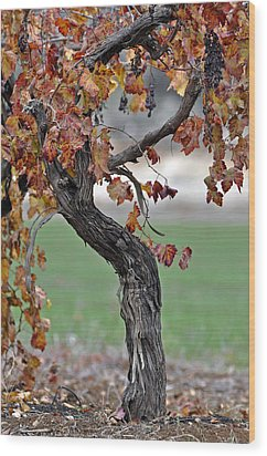 Wood Print featuring the photograph Autumn At Lachish Vineyards 3 by Dubi Roman