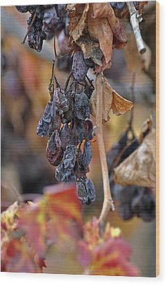 Wood Print featuring the photograph Autumn At Lachish Vineyards 4 by Dubi Roman