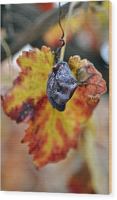 Wood Print featuring the photograph Autumn At Lachish Vineyards 5 by Dubi Roman