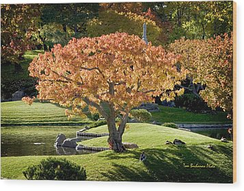 Autumn At Nikka Yuko Wood Print by Tom Buchanan