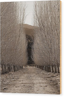 Autumn Bares Her Trees Wood Print by Jeff Lowe