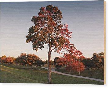 Wood Print featuring the photograph Autumn Beauty by Milena Ilieva
