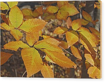 Autumn Beech  Wood Print by Michael Peychich