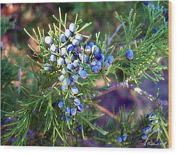 Wood Print featuring the photograph Autumn Berries by Betty Northcutt