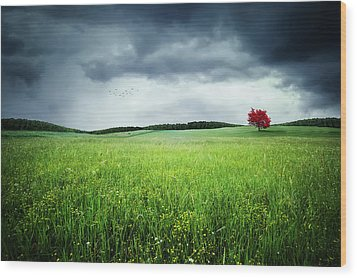 Wood Print featuring the photograph Autumn by Bess Hamiti