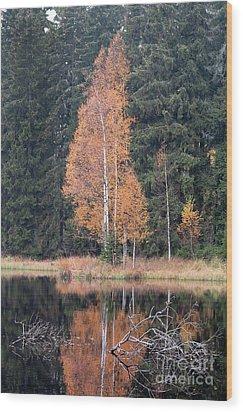 Autumn Birch By The Lake Wood Print by Michal Boubin