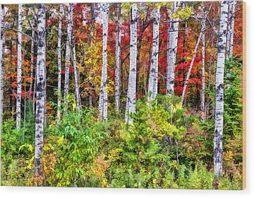 Wood Print featuring the painting Autumn Birches by Christopher Arndt