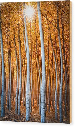 Wood Print featuring the photograph Autumn Canopy Burst by Dan Mihai