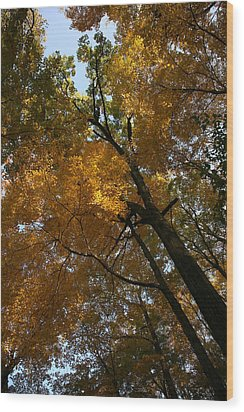 Wood Print featuring the photograph Autumn Canopy by Shari Jardina
