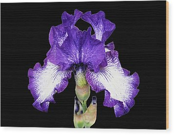 Autumn Circus Iris Wood Print